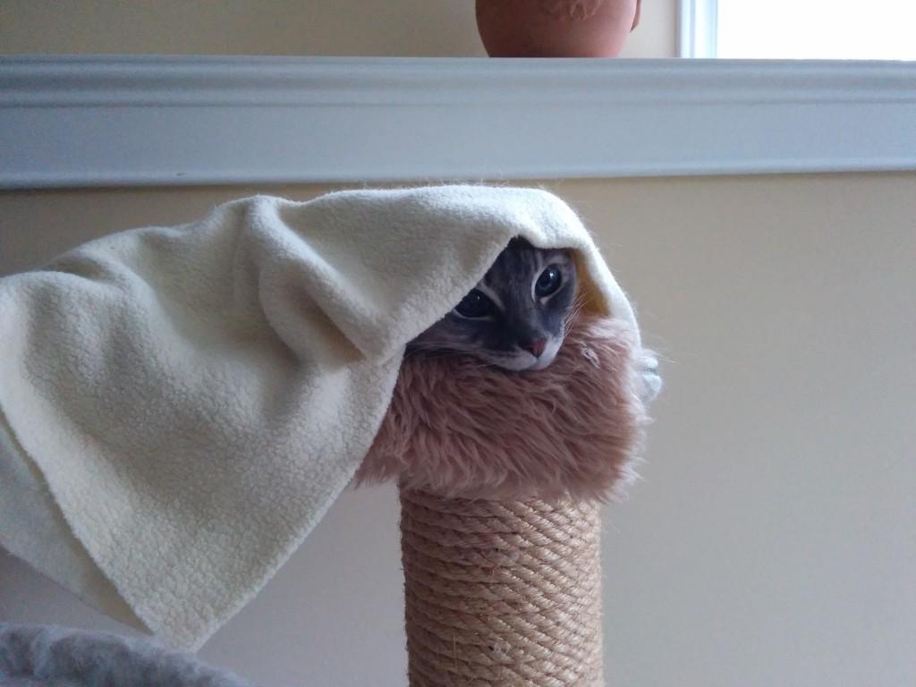 Cat In Hammock Hiding Under Blanket Animal