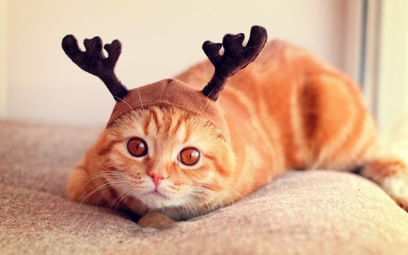 Cutest Reindeer